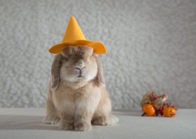13-chinninguyenphotography pet photography cute animal bunny rabbit furkid