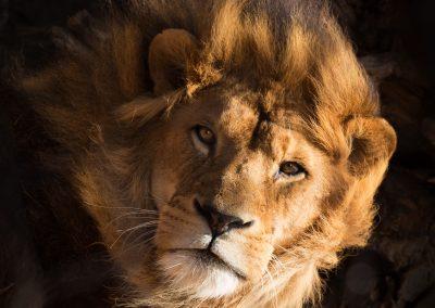 2-chinninguyenphotography travel photography wildlife photography cute animals