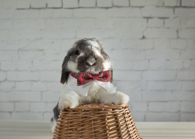 22-chinninguyenphotography pet photography cute animal bunny rabbit furkid