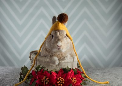 3-chinninguyenphotography pet photography cute animal bunny rabbit furkid