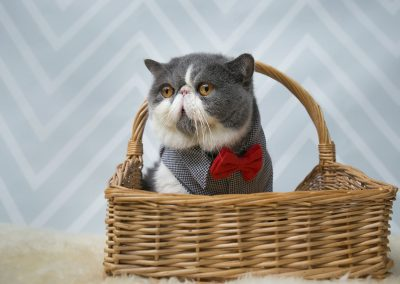 7-chinninguyenphotography pet photography cute animal furkidjpg
