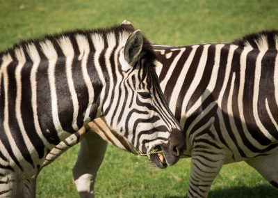 7-chinninguyenphotography travel photography wildlife photography cute animals
