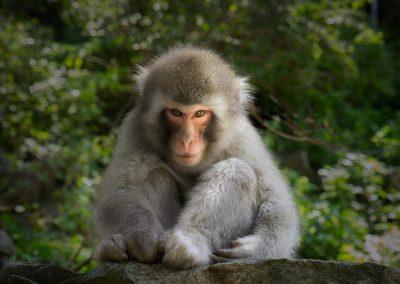 8-chinninguyenphotography travel photography wildlife photography cute animals